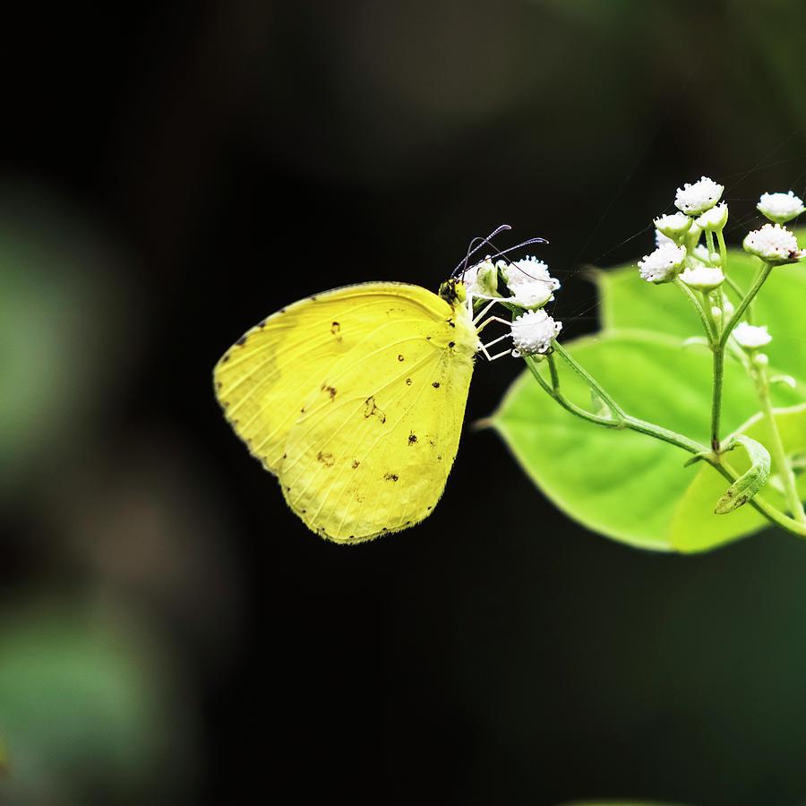 Elegance in yellow by Vishwanath Bhat