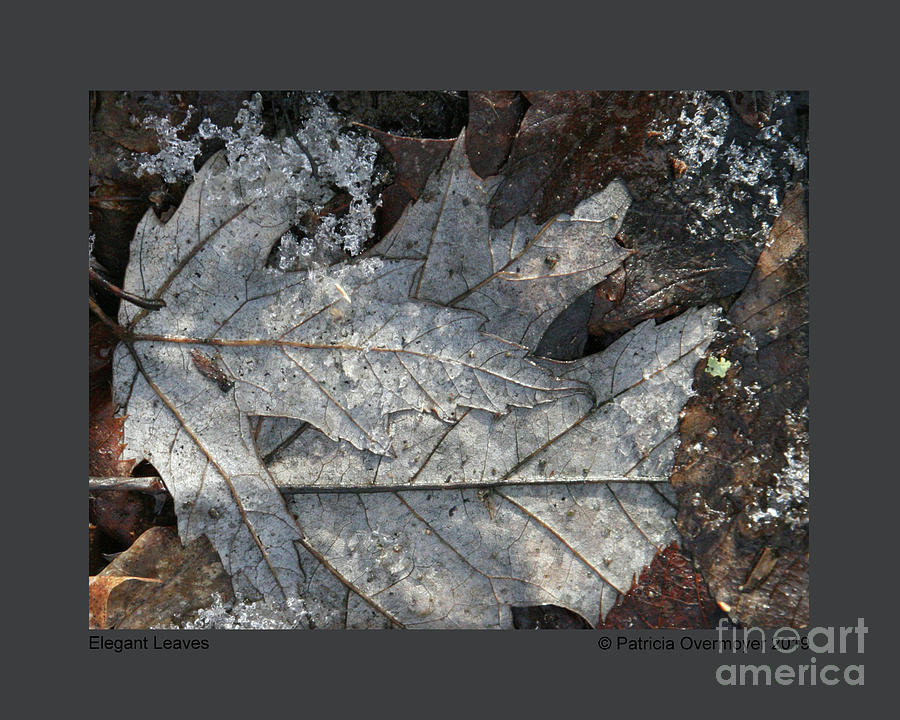 Elegant Leaves by Patricia Overmoyer