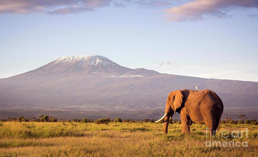 Elephant And Kilimanjaro Photograph by Wldavies