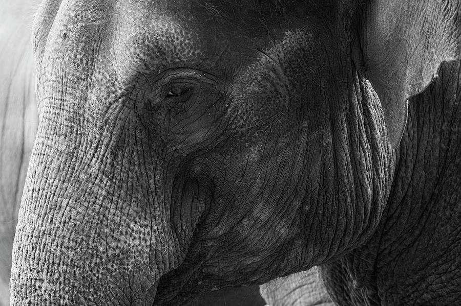 Elephant Photograph by Andrew Dernie