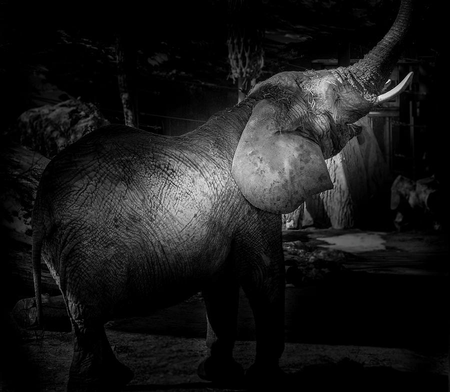 Elephant at Play by Peter Wagner