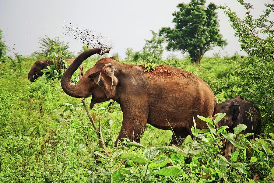 Elephant Photograph by Basia Asztabska
