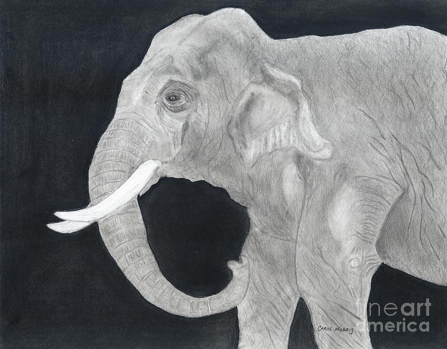 Elephant by Carol Morris