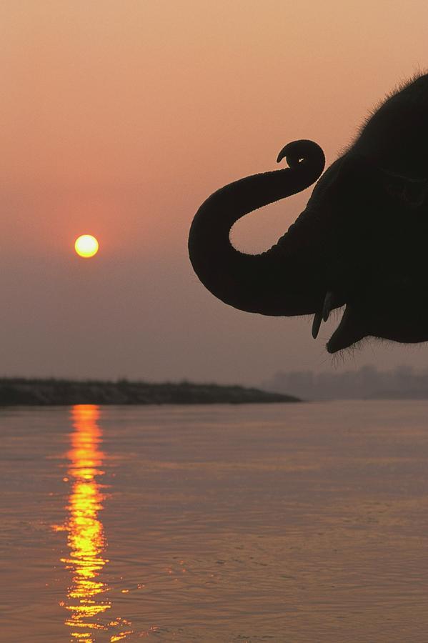 Elephant, Chitwan National Park, Nepal Photograph by Design Pics / Sean White
