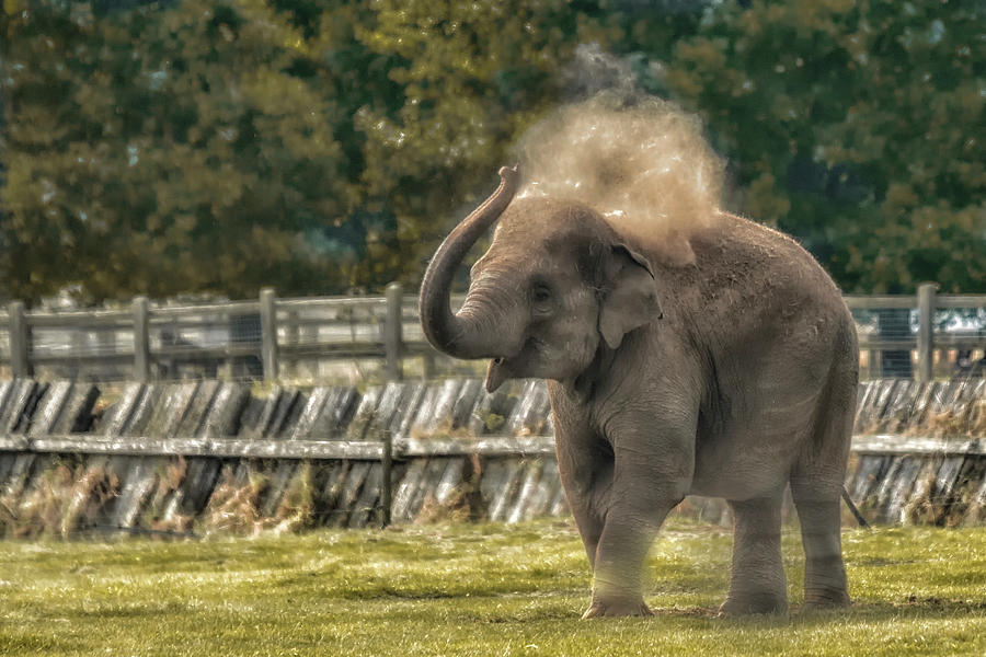 Elephant by Chris Boulton