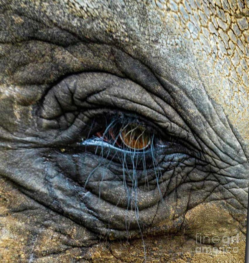 Elephant Eye by Randy J Heath