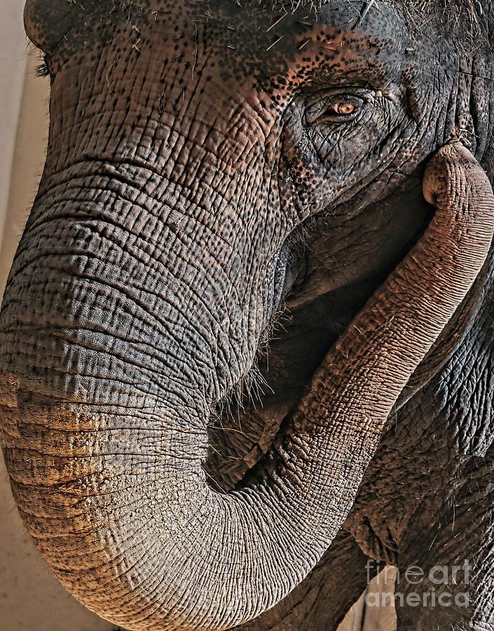 Elephant Eyelashes by Cathy Donohoue