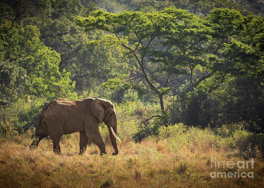 Elephant Forest by Jamie Pham