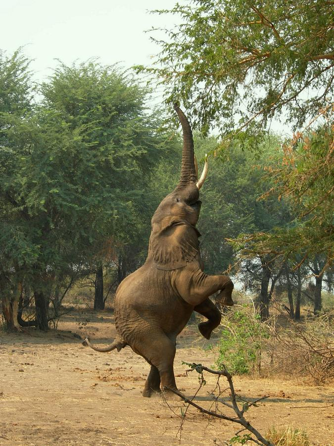 Elephant Photograph by Jeryco