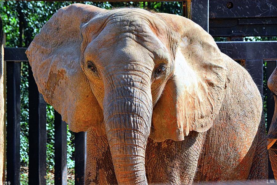 Elephant by Lisa Wooten