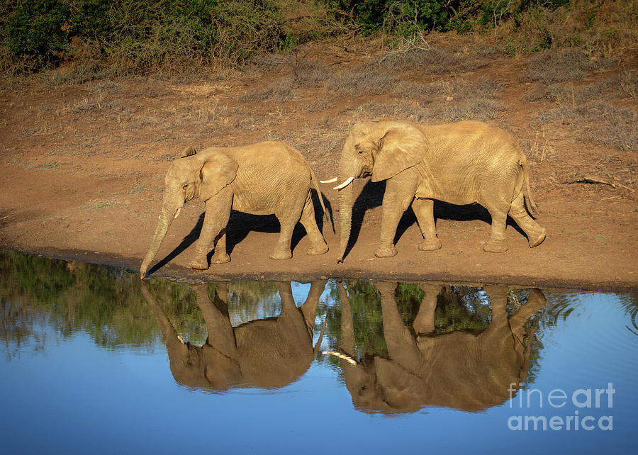 Elephant Mirror by Jamie Pham