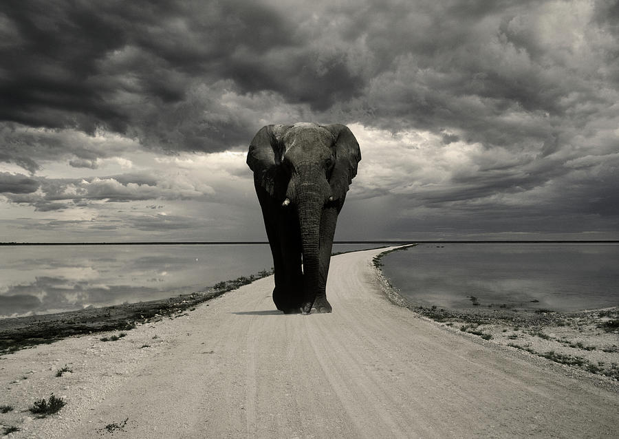 Elephant On The Road, Etosha National Photograph by Franz Aberham