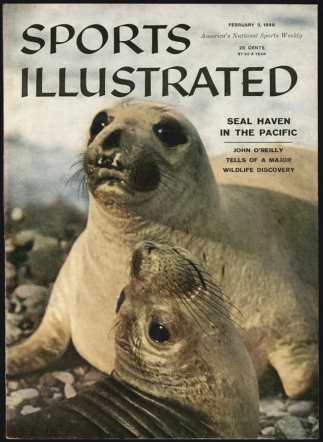 Elephant Seals Sports Illustrated Cover Photograph by Sports Illustrated