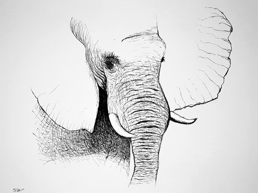 Elephant Drawing - Elephant Sketch by Abstract Angel Artist Stephen K