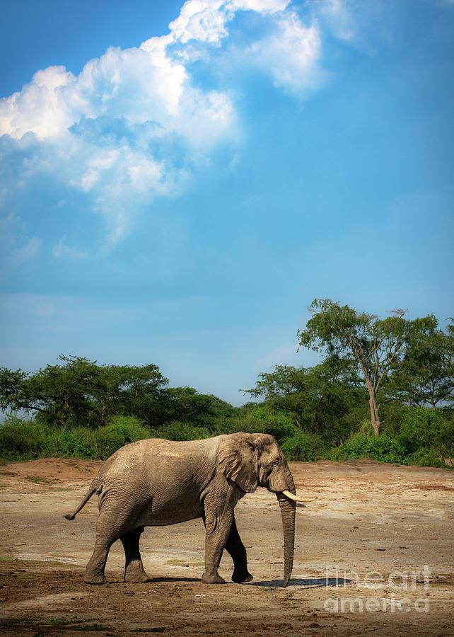 Elephant Sky by Jamie Pham