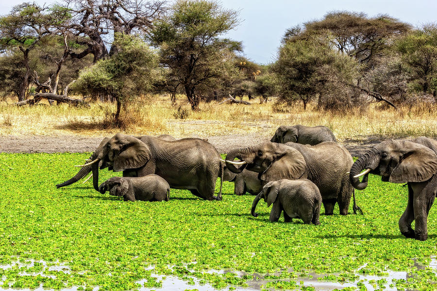 Elephant Spa by Kay Brewer