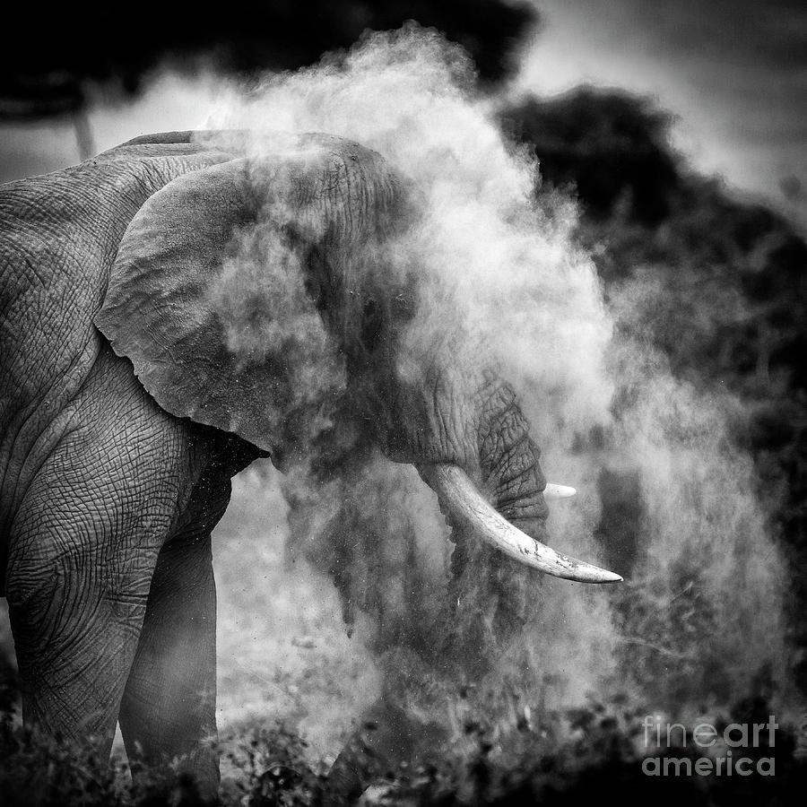 Elephant Throwing Dirt Photograph by Elsen Karstad