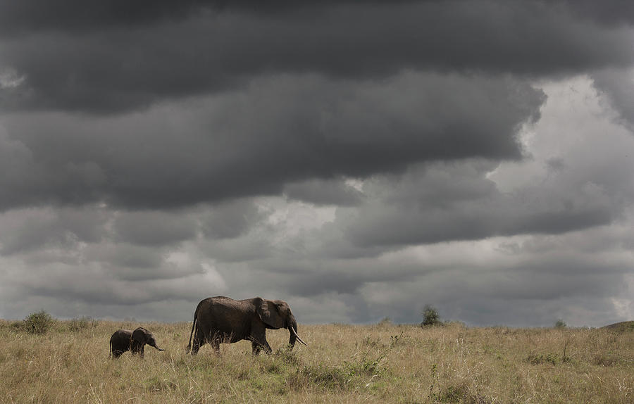 Elephant Under Cloudy Sky Photograph by Buena Vista Images