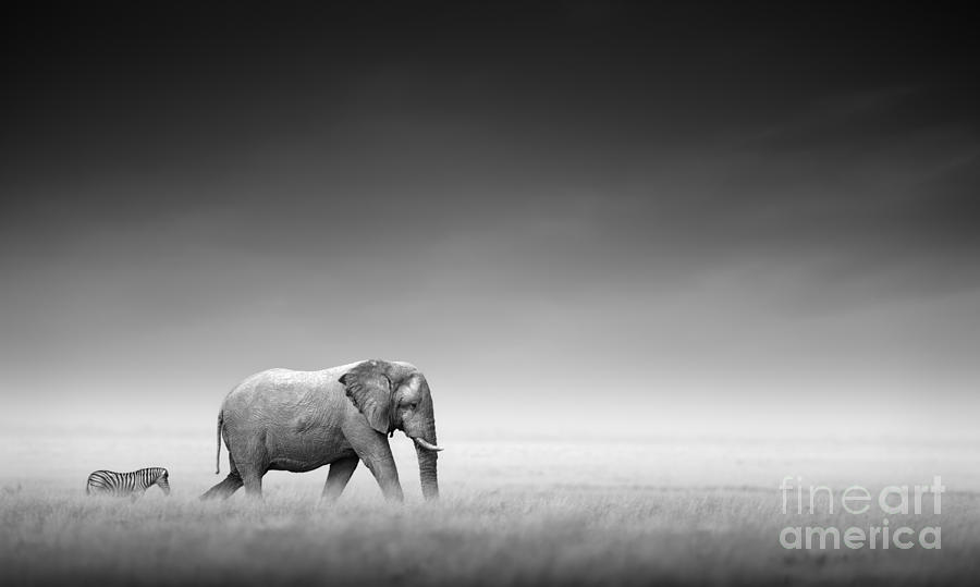 Behind Photograph - Elephant With Zebra Behind On Open by Johan Swanepoel