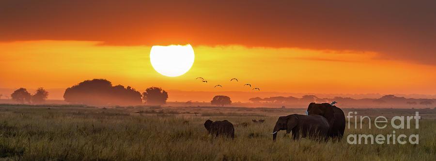Elephants at sunrise in Amboseli, Horizonal Banner by Jane Rix