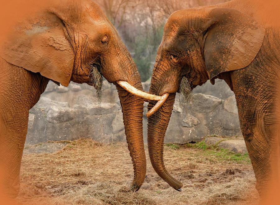 Elephants  by Gouzel -