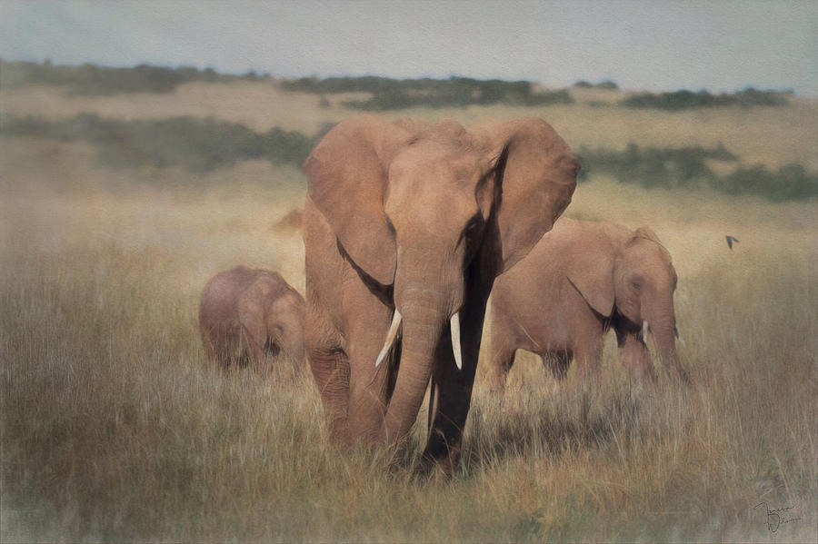Elephants in the Grass by Teresa Wilson