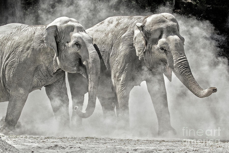 Elephants by Sonya Lang