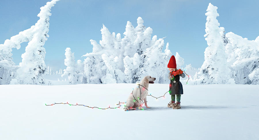 Elf Decorating Dog With Christmas Lights Photograph by Per Breiehagen