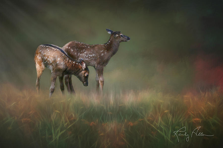 Elk Calves by Randall Allen