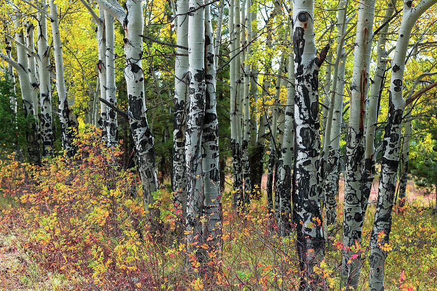 Elk Tree Markings by James BO Insogna