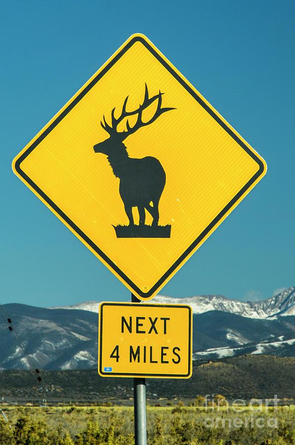 Elk Warning Sign by Tim Mulina