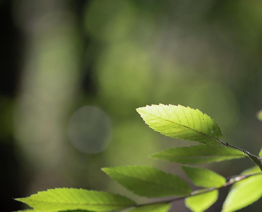 Elm Leaves by Karen Rispin