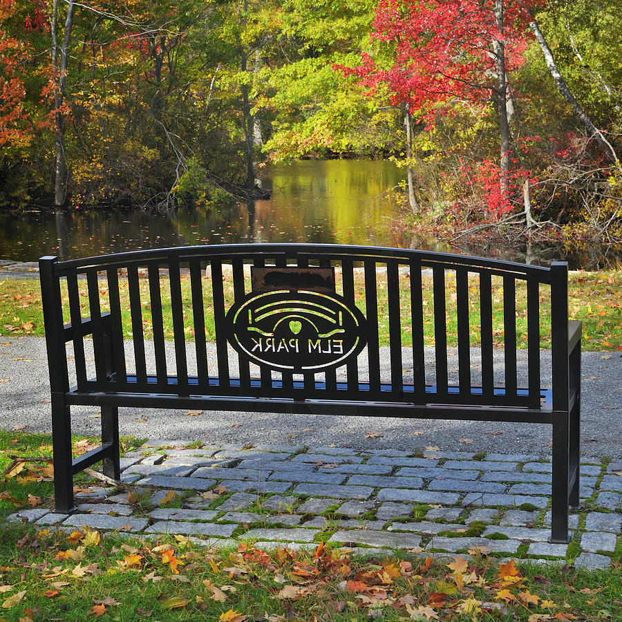 Bench Photograph - Elm Park Autumn Bench by Luke Moore