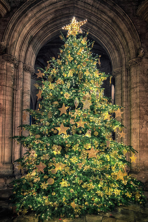 Ely Cathedral Christmas Tree 2018 by James Billings