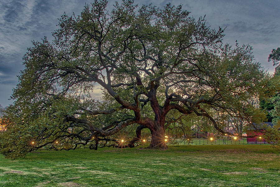 Emancipation Oak at Dusk by Jerry Gammon