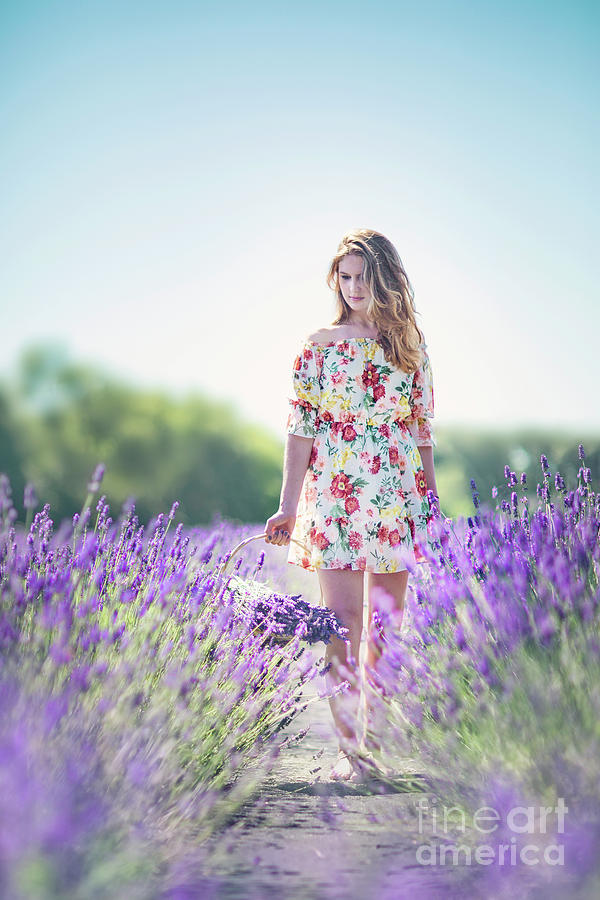 Embraced In Lavender Photograph