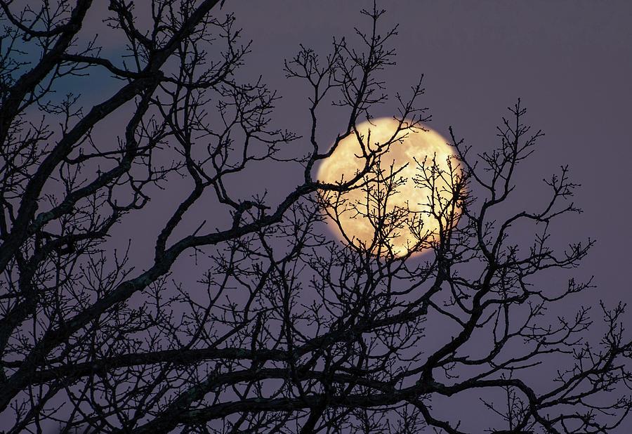 Embracing The Moon by Lara Ellis