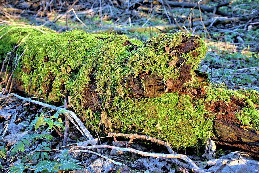 Deadfall Photograph - Emerald Tree by Bonfire Photography