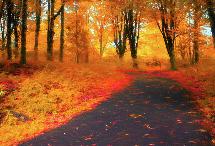 Emmaus Community Park Path - Colors of Fall by Jason Fink