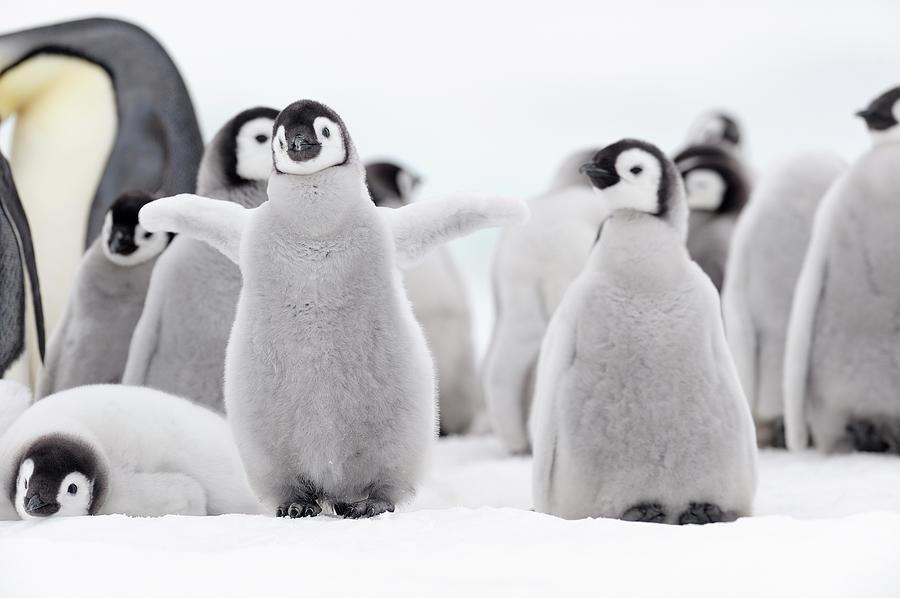 Emperor Penguin Photograph by Martin Ruegner