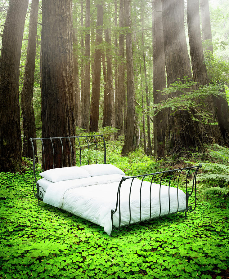 Empty Bed Standing In Bed Of Clovers In Photograph by Stephen Swintek
