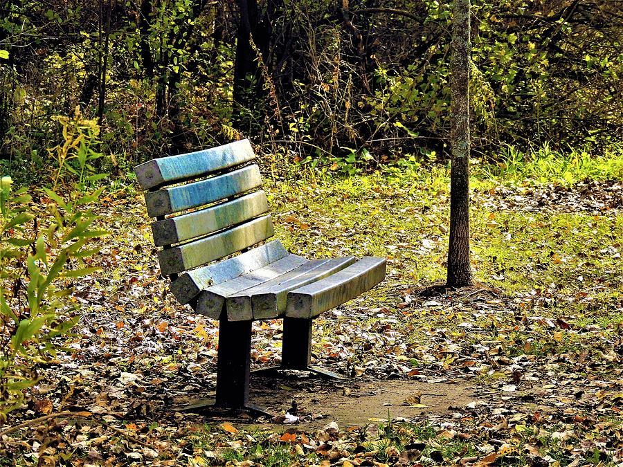 Empty Bench In Autumn Photograph