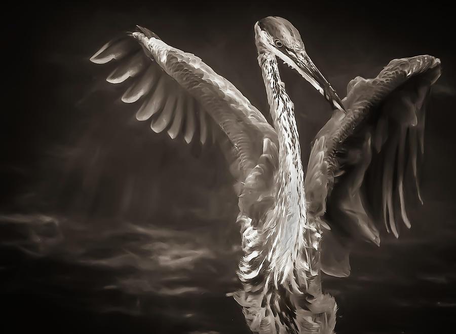 Bird Photograph - Enantiodromia by Paul Malen