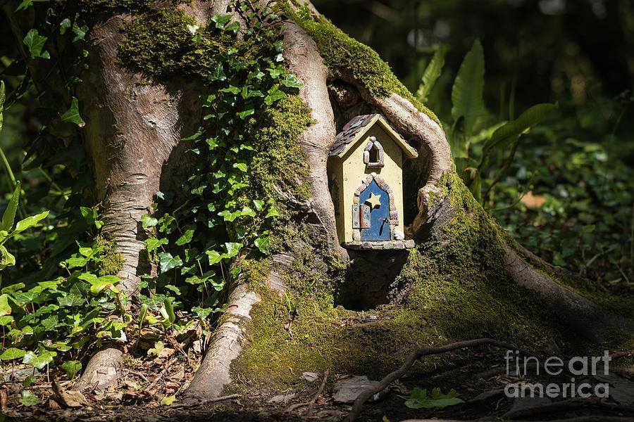 Enchanted Woodland by Eva Lechner
