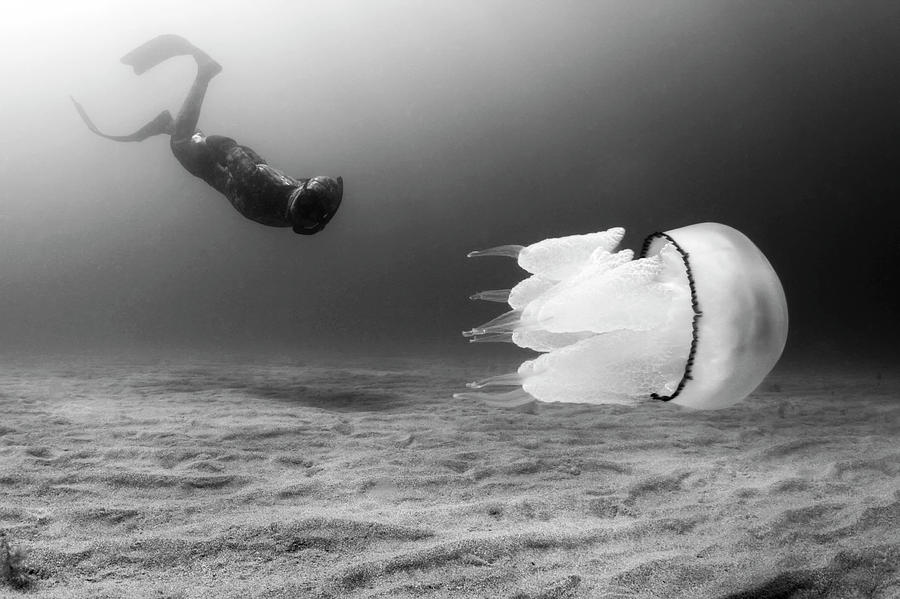 Encounters II Photograph by Underwater Photography By Ivan Bakardjiev