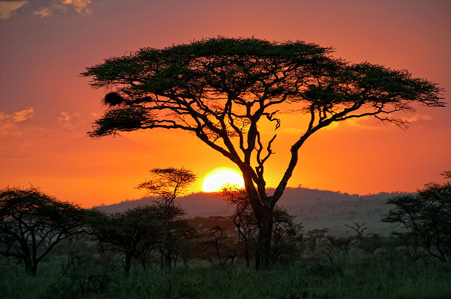Scenic Photograph - End Of A Safari-day In The Serengeti by Guenterguni