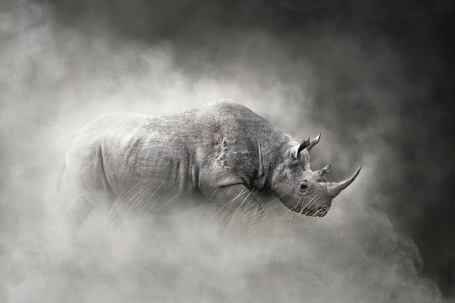 Endangered Black Rhino In The Dust by Susan Schmitz