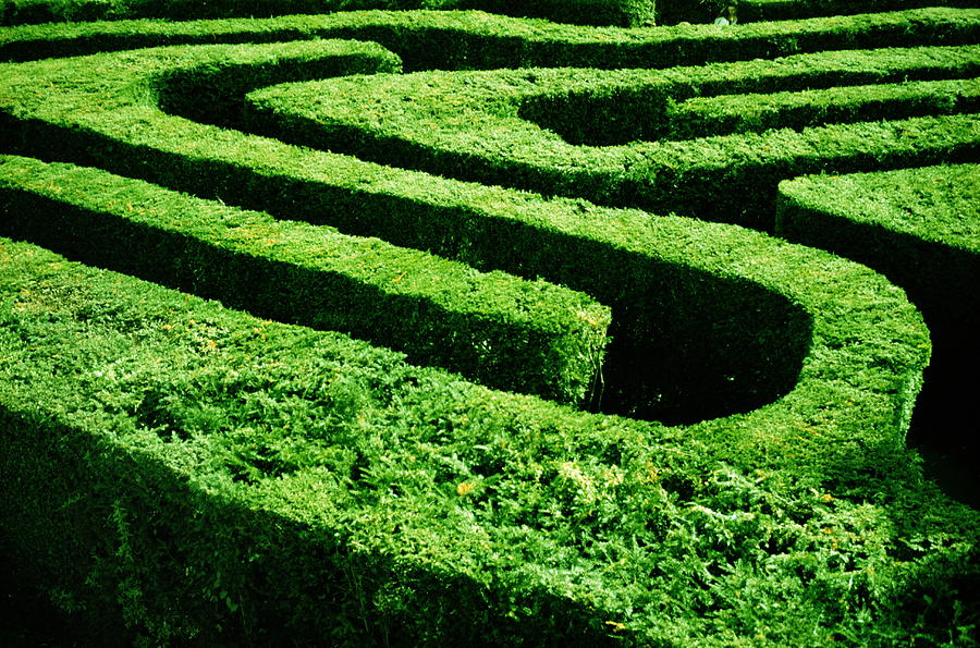 England, London, Hampton Court Maze Photograph by Romilly Lockyer