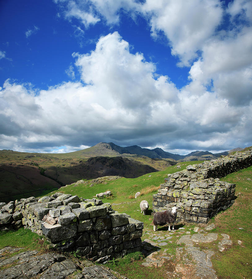 English Lake District Landscape With Photograph by Avtg