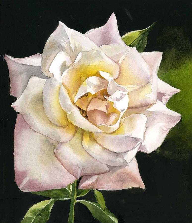 English rose by Alfred Ng